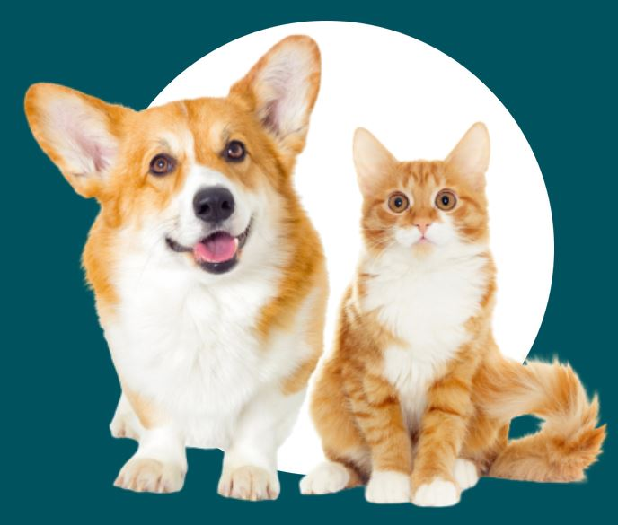 naturopathe-chien-chat