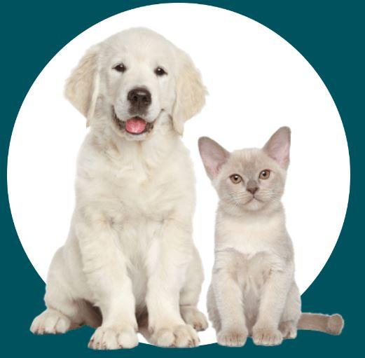 naturopathie-animale-chien