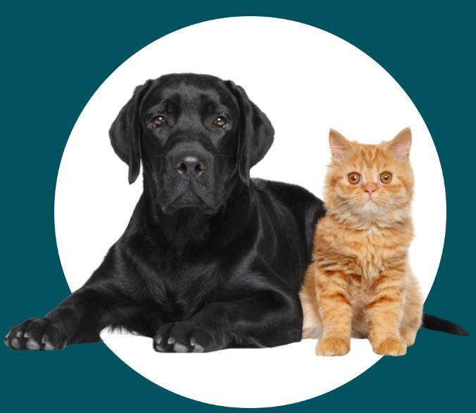 naturopathie-chien-chat-animaux