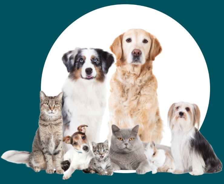 naturopathie-chien-chat-annecy