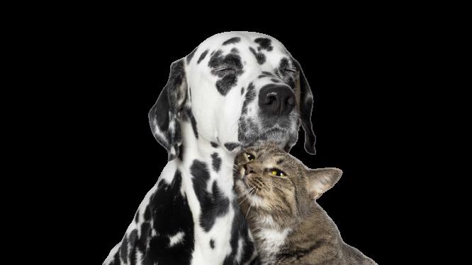 naturopathie-naturopathe-chien-chat